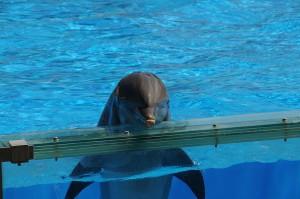 800px-dolphins_zoo_lisbon_5