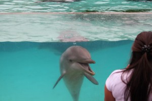 dolphin_interaction4_seaworld